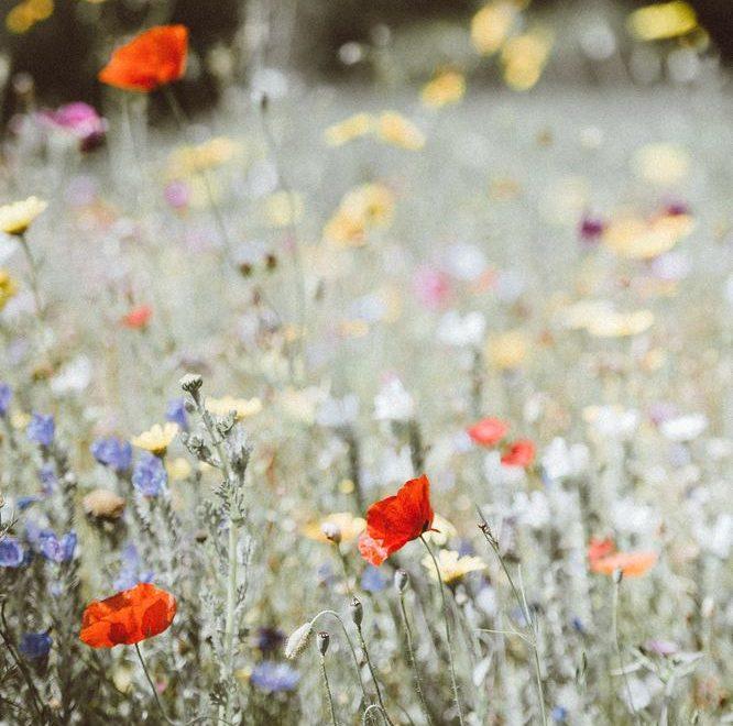 Ljuvliga blomster av alla de slag