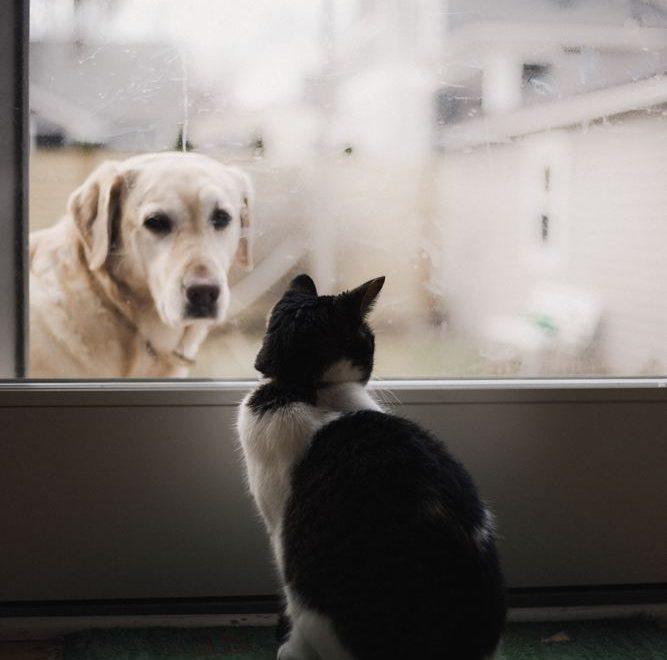 Även våra kära husdjur har rätt till bra vård